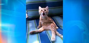 cat shock